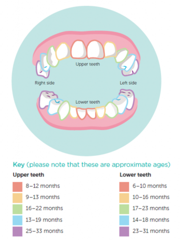 Well child tamariki ora my health book healthed for more information on teething and caring for teeth see teething age 6 weeks to 6 months looking after baby teeth age 6 months to 12 months ccuart Choice Image